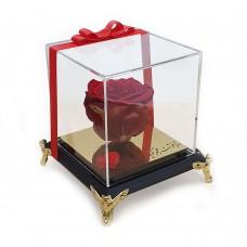 گل رز جاودان-1