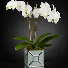 The FTD Elegant Impressions Luxury Orchid a1269